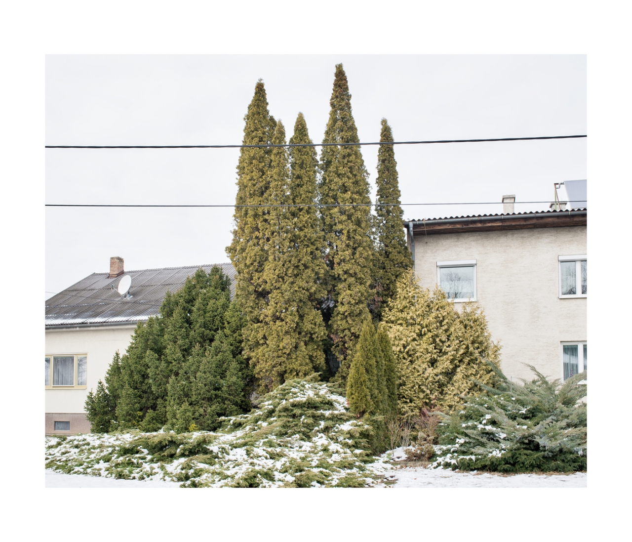 MAXIMILIAN HAIDACHER / PHOTOGRAPHY Trees